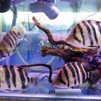 פיש מרקט - יבואנים של דגי נוי